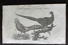 Goldsmith C1815 Antique Bird Print. Common & Golden Pheasant